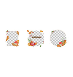 autumn social media post templatespost square vector image