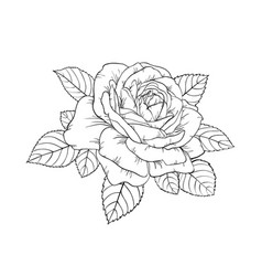 beautiful black and white rose and leaves floral vector image vector image