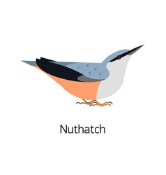 nuthatch isolated on white background cute small vector image