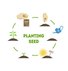 Planting seed banner stages growth plant vector