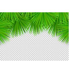 summer palm leaves on transparent background vector image
