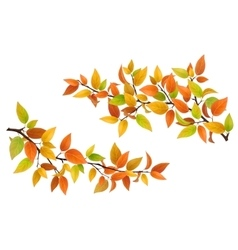 Tree branch with autumn leaves vector image vector image