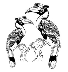 birds woodpecker forest wing vector image