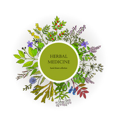 Different medicinal plants collection vector