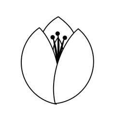 Flower floral petal icon vector