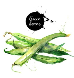 Green beans Hand drawn watercolor painting on vector image