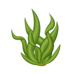 Isolated object algae and vegan symbol vector
