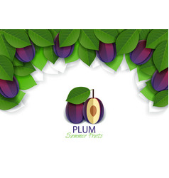 paper cut ripe plum fruit background frame vector image