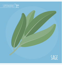 sage flat design icon vector image