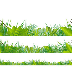 Seamless jungle and tropical vegetation vector