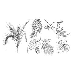set of brewing ingredients vector image