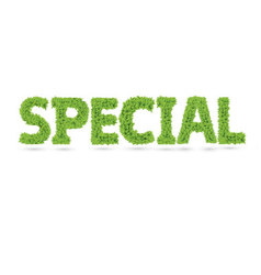 Special word made green leafs vector