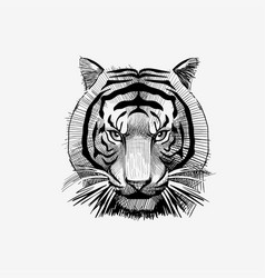 Tiger face drawing animal vector