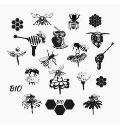 Set for honey sketches 4 vector image