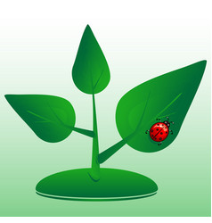 sprout of a plant with ladybug symbol of life vector image