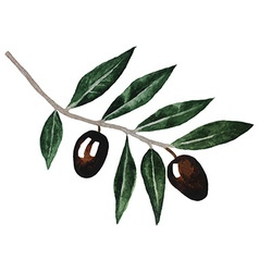 Olive branch Watercolor isolated on white vector image