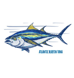 atlantic tun vector image