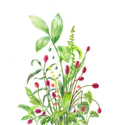 burnet lily of the valley stone bramble vector image