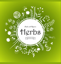 herbs card design vector image