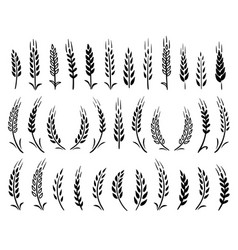 Set black hand drawn wheat ears icons vector