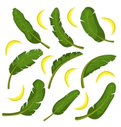 Tropical Leaves With Bananas vector