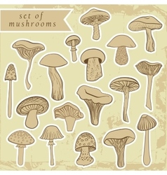Vintage set of different hand drawn mushrooms in vector image