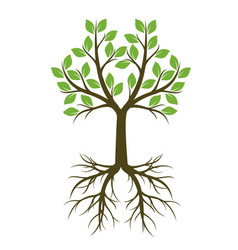 green shape of tree with root vector image