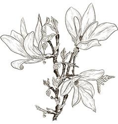 Hand Drawn Magnolia Flower Sketch vector