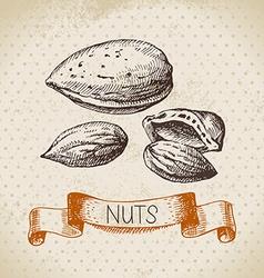 Hand drawn sketch nut vintage background vector image
