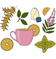 Herbal tea set vector