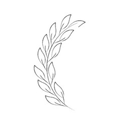 laurel decoration branch ornament image vector image