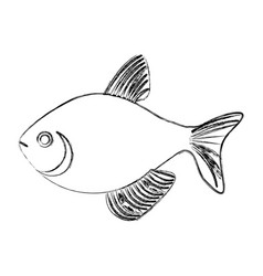 Monochrome sketch with sea fish vector