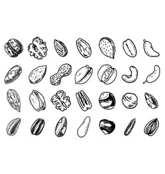 nuts mix background seeds and granule corn and vector image