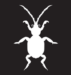white beetle on a black forehead vector image