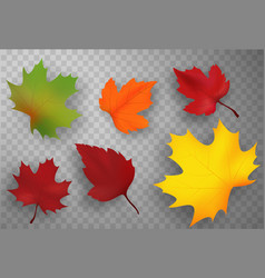 Autumn leaves set isolated vector
