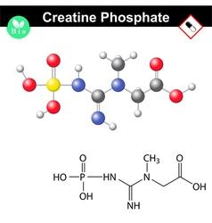 Phosphocreatine molecule - creatine phosphate vector