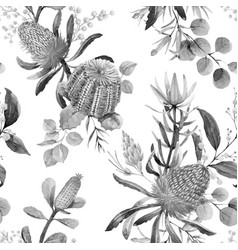watercolor australian banksia pattern vector image