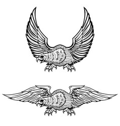 eagle isolated on white background vector image