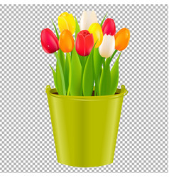 tulip in pot vector image