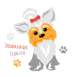 funny yorkshire terrier dog sitting vector image