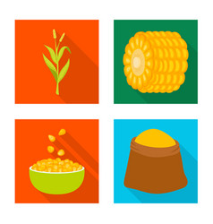 isolated object of cornfield and vegetable symbol vector image