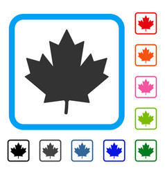 maple leaf framed icon vector image
