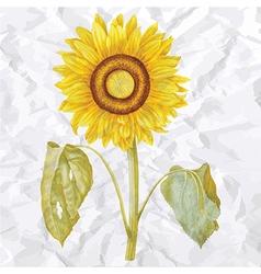 Vintage of sunflower vector