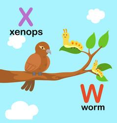 alphabet letter w-worm x-xenops vector image