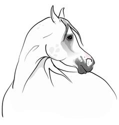 arab horse vector image vector image
