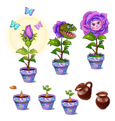 stages of growth magical flower with human face vector image