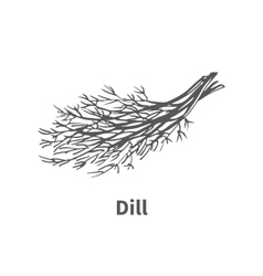Hand-drawn dill vector