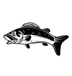 Perch fish icon isolated on white background vector