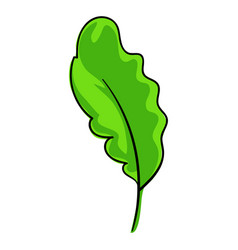 salat leaf icon cartoon style vector image