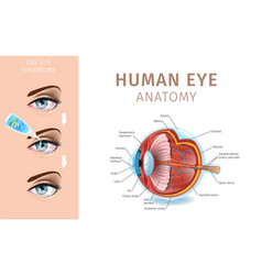 section of eye schematic diagram dry eye syndrome vector